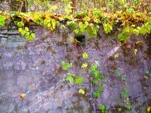 Старые утесы каньона, Kamenets Podolskiy, Украины Стоковые Изображения RF