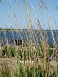 Старые шлюпка и тростники Стоковая Фотография RF
