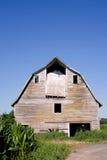 Старый амбар в кукурузном поле Стоковые Изображения