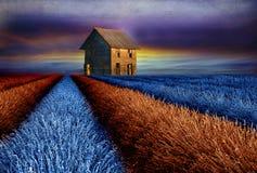 Старый амбар на красочном поле лаванды Стоковое Изображение
