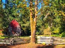 Старый амбар предусматриванный в красном плюще, острове ванкувер, ДО РОЖДЕСТВА ХРИСТОВА Стоковые Фотографии RF
