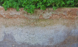 Старый бак деревьев Стоковое Фото