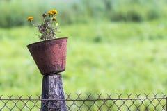 Старый бак с цветками на поляке загородки звена цепи Стоковое Изображение RF