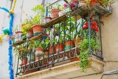 Старый балкон с цветками и заводами Стоковая Фотография