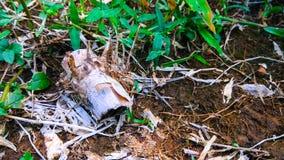 Старый бамбуковый деревянный ландшафт изображения природы предпосылки Стоковое Изображение