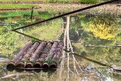 Старый бамбуковый сплоток на воде покинутого пруда Акватическая вегетация Стоковые Фото