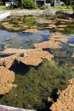 Старый бассейн Стоковое Изображение