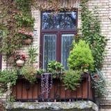 Старый балкон перерастанный с цветками Стоковое фото RF