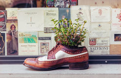 Старый ботинок как декоративный цветочный горшок Стоковое Изображение RF