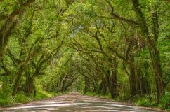 Старый бульвар дубов Стоковые Изображения RF