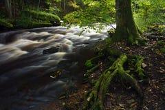 старый вал реки Стоковые Изображения