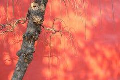 Старый вал с красной стеной Стоковые Изображения
