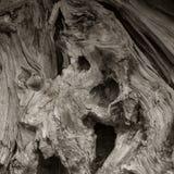старый вал Стоковая Фотография RF