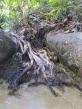 старый вал корней стоковые изображения rf