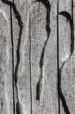 старый вал Текстура жука расшивы Стоковые Изображения RF