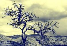 старый вал Стоковое Фото