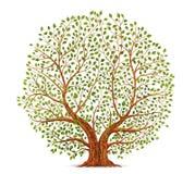 Старый вектор дерева Стоковая Фотография
