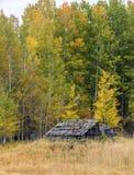 Старый ветхий сарай в осени Стоковая Фотография RF