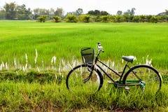 Старый велосипед в рисовых полях стоковое фото rf