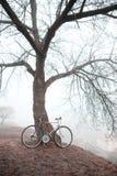 Старый велосипед около дерева Стоковое Изображение RF