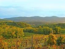 Старый виноградник Словения Стоковые Фото