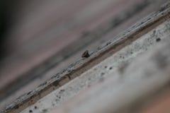 Старый винт в стене Стоковые Изображения