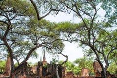 Старый висок в парке Ayutthaya историческом Таиланда стоковые фотографии rf