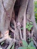 Старый вымолите дереву Стоковые Изображения RF