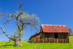 Старый деревянный амбар с ржавой крышей олова рядом с редким дубом стоковое фото rf