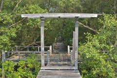 Старый деревянный лес дорожки и мангровы стоковое фото