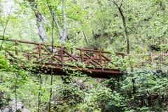 Старый деревянный мост в глубоком лесе, естественной винтажной предпосылке стоковые фотографии rf