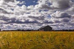 Старый дом амбара в поле Rye Стоковое фото RF