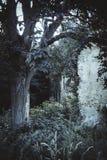 Старый дом в overgrown саде Стоковое Изображение RF