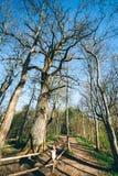 Старый дуб в парке Neris региональном, Литве Стоковые Фотографии RF