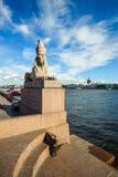 Старый египетский сфинкс, St Петербург, Россия Стоковое Изображение RF