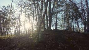 Старый деревянный контраст Стоковая Фотография RF