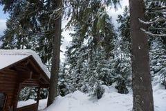 Старый деревянный коттедж между покрытыми снег елями Стоковые Изображения RF