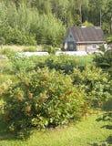 Старый деревянный дом в лесе Стоковое фото RF