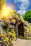 Старый деревянный строб в парке города с глицинией цветет Стоковое фото RF