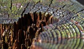 Старый деревянный тимберс Стоковое Фото