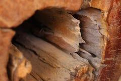Старый деревянный хобот Стоковая Фотография RF