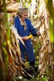 Старый женский фермер на сборе мозоли Стоковые Фотографии RF