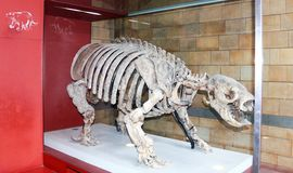 Старый животный скелет Стоковое Изображение RF