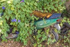 Старый зеленый ржавея мопед частично похоронен яркой ой-зелен листвой стоковая фотография rf