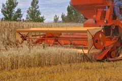 Старый зернокомбайн жать пшеницу стоковая фотография