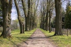 Старый исторический переулок каштана в Chotebor во время весеннего сезона, деревьях в 2 строках, романтичной сцене стоковое изображение