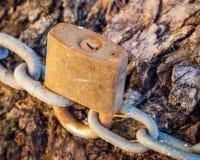 Старый и очень ржавый замок обеспечивая цепь вокруг ствола дерева Стоковое Фото