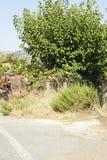 Старый и ржавый трактор на ферме, земледелие Стоковые Фото