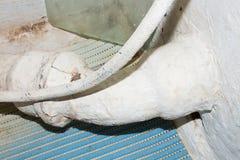 Старый и ржавый треснутый трубопровод стоковые изображения