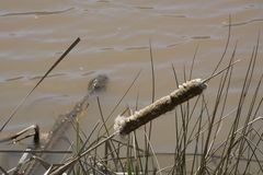 Старый кабель кота на крае ` s воды стоковая фотография rf